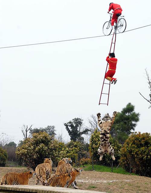 ladder cycling won't catch on